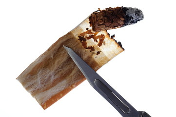 Zigarettenstummel seziert