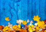 Autumn leaves at the blue wall