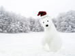 White bear with Santa hat in snowy field