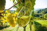 Fototapety Weinglas mmit Wein im Weingarten