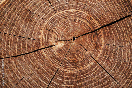 Cut timber with growth rings