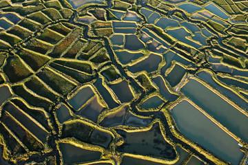Marais salants de la Tremblade