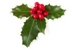 Holly with berries, clipping path included.