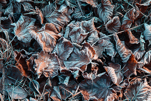 December frozen leaves