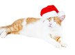 funny red and white cat in santa's hat isolated