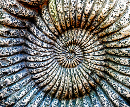 Fossil of Ammonite in a stone