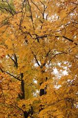 Outono em Varsóvia