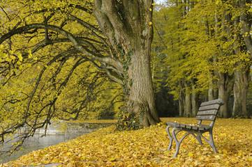 Herbst im Lindenhofpark bei Lindau