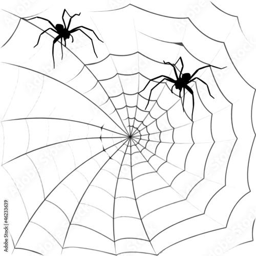 spinnennetz © entelechie