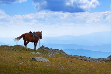 saddled horse near abyss edge
