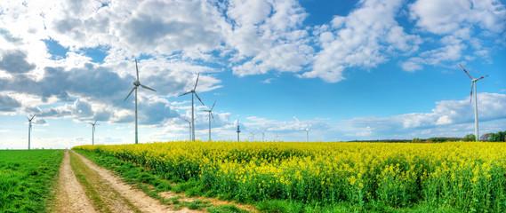 Panorama von Rapsfeld mit Windrädern