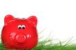 Sparschwein auf Rasen