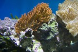 Fototapeta Do akwarium - Coral reefs © Radoslaw Maciejewski