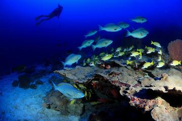 Korallenriff mit Taucherin