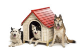 Group of dogs in and surrounding a kennel poster