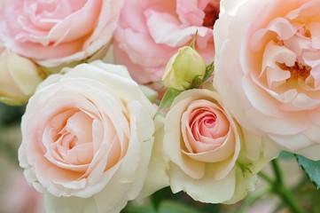 薔薇(ピエール・ドゥ・ロンサール)