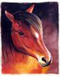 Pferdekopf - Zeichnung