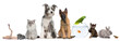 canvas print picture - Group of pets with dog, cat, rabbit, ferret, fish, frog, rat