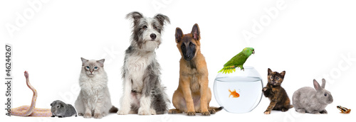 Foto op Aluminium Kikker Group of pets with dog, cat, rabbit, ferret, fish, frog, rat