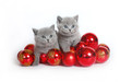 Two kittens with Christmas balls