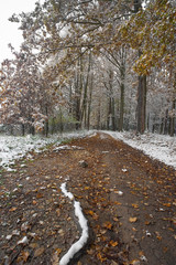 a pathway in an autumn forest with first snow