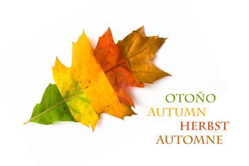 Herbstfarben - Herbst-Blatt