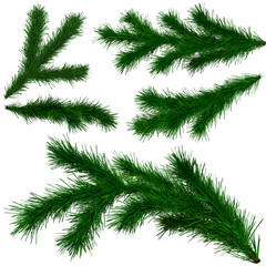 set of Christmas tree fir branches