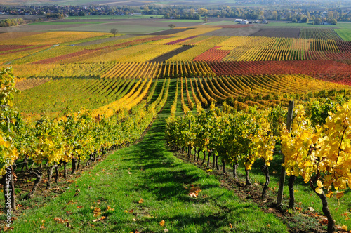 canvas print picture Vineyards in autumn colours. The Rhine valley, Germany