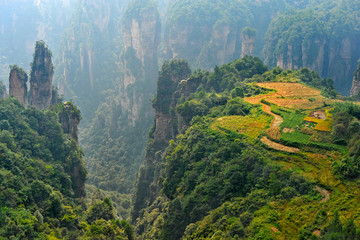 Zhangjiajie natural scenery in China ( Heavenly Garden )