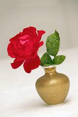 Vase mit roter Rose