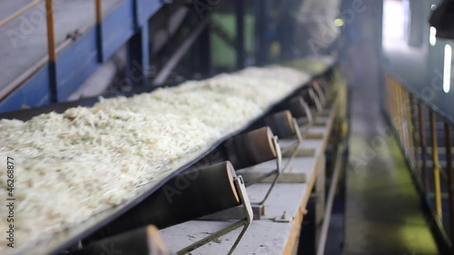 Sugar Beet on Conveyor Belt - Sugar Refinery