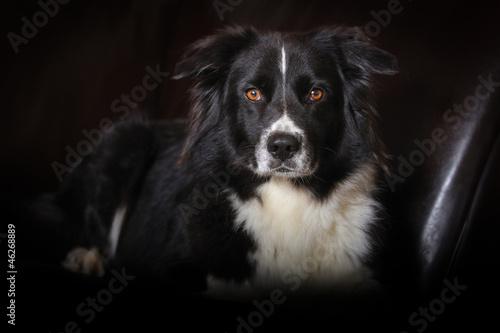 Fototapeten,hund,black,eye,hund