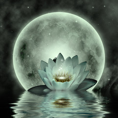 Abstract background with lotus flower