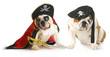 dog pirates