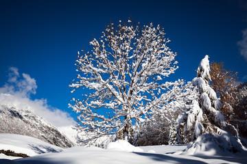 albero con chioma innevata