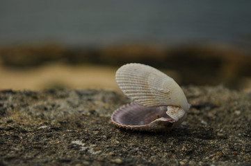 Open Shell on Wall