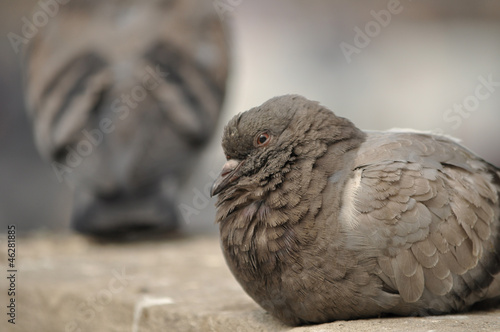 Pigeon resting on Wall