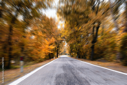 road in the forest in autumn