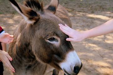 Fondling a donkey