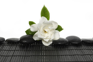 Gardenia flower with black stones on mat