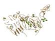 Human Epidermal Growth Factor Receptor 2 (Her2, Neu, CD340)