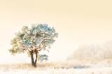 Fototapeta gałąź - jasny - Drzewo