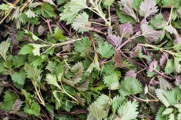 Texture of fresh nettle leaves