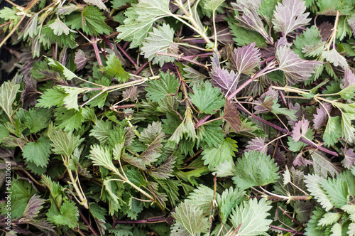 Texture of fresh nettle leaves