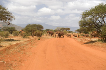 Elephants are crossing the street