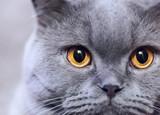Fototapete Katze - Charmant - Haustiere