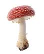 Red mushroom - 46326459