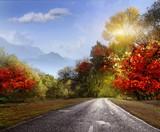 Road, asphalt, autumn