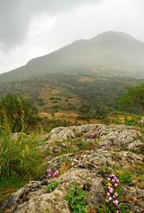 Delfi landscape.
