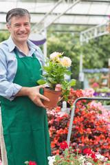 Gardener holding a plant